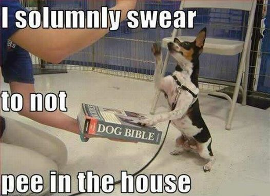 Faithful Little Dog