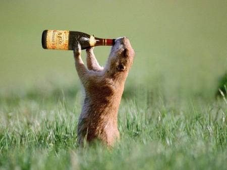 Beer Loving Animal