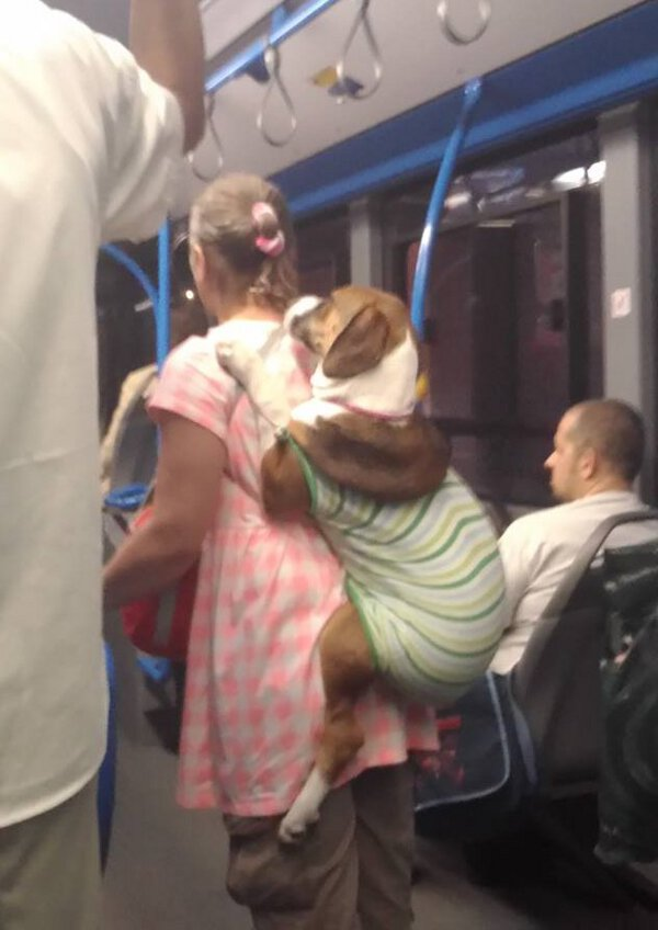 Carrying Dogs
