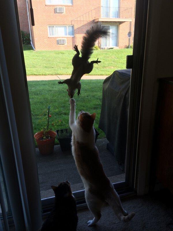 Cat-Squirrel Fight
