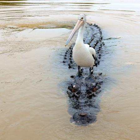 Croc Boat