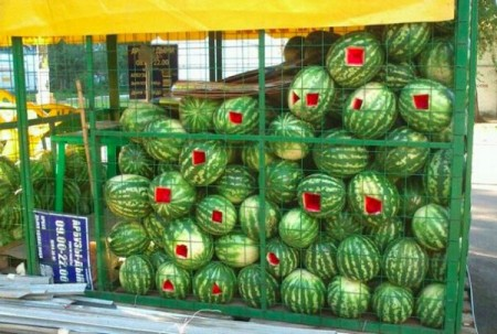 Crying Watermelons